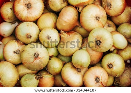 Raw Ripe Yellow Onions Pile Background On Local Market. - stock photo