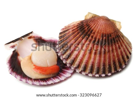 Raw scallops on white background - stock photo