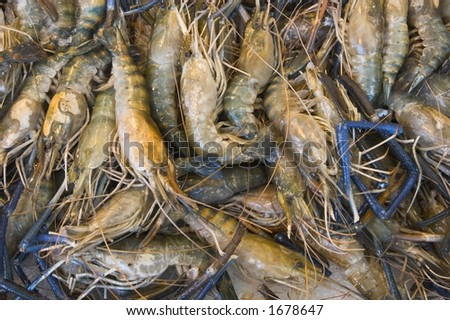 Raw shrimp - stock photo