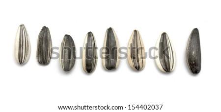 raw sunflower seeds - stock photo