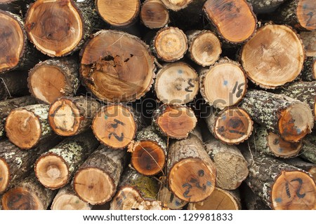 Raw wood material - stock photo