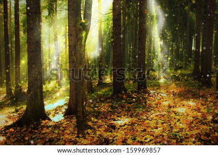 ray of light in autumn forest - stock photo