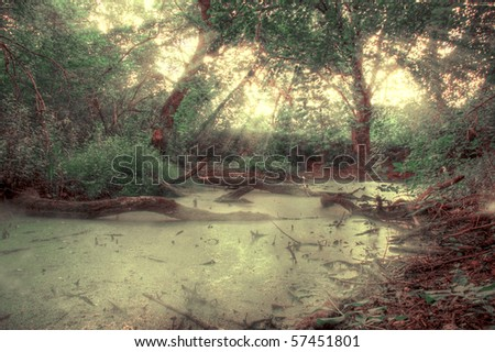 Rays of light falling through the mist and trees in the swamp - stock photo