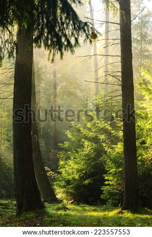 Rays of light in north Poland.Pomerania province/Autumn rays of light - stock photo