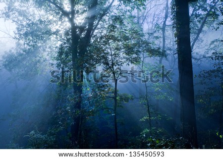 Rays of light through think forest fog - stock photo