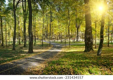 Rays of sun in autumn park - stock photo
