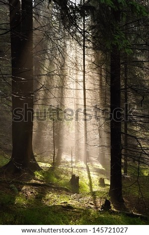 Rays of sun in the fog in the forest - stock photo