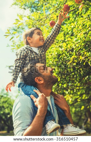 Reaching the tastiest fruit. Joyful little boy stretching out hand to apple while his father carrying him on shoulders - stock photo