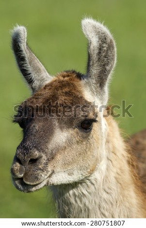 Ready for my close up near Potlach, Idaho. - stock photo