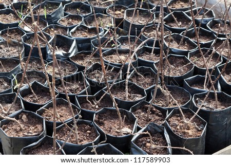 Ready for planting tree sprouts in cans at hothouse - stock photo