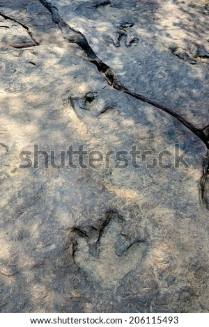 real dinosaur footprint on Phu Faek Forest Park ,Kalasin, Thailand. - stock photo