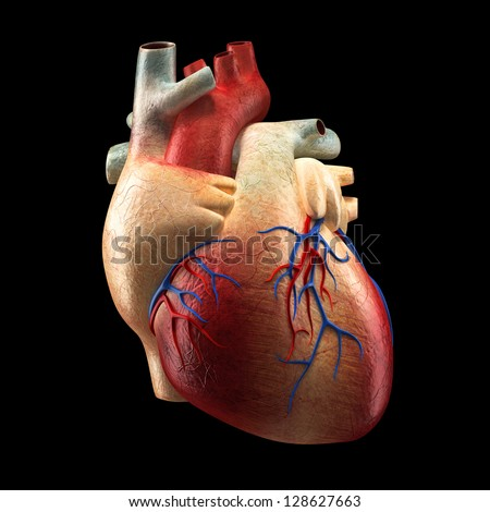 Real Heart Isolated on black - Human Anatomy model - stock photo