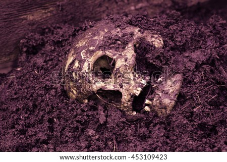 Real human skull as crime scene, color manipulated, narrow focus - stock photo