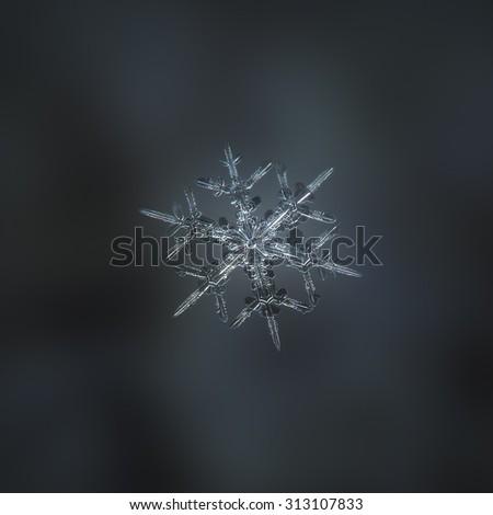 Real snowflake photo (medium size stellar dendrite crystal) on blurred dark background - stock photo