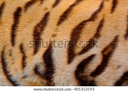 Real tiger skin - stock photo