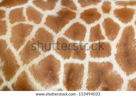 Realistic giraffe texture  for background - stock photo