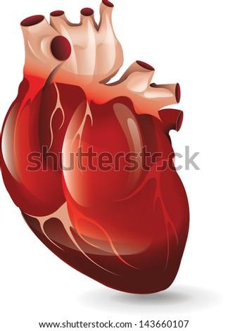 Realistic Heart bitmap copy - stock photo