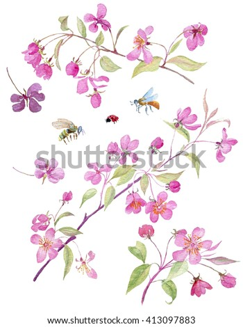 Realistic sakura japan cherry branch with blooming flowers. Watercolor set with blossom branch of pink sakura flowers. Isolated Set on white background. Isolated hand drawn cherry blossom. - stock photo