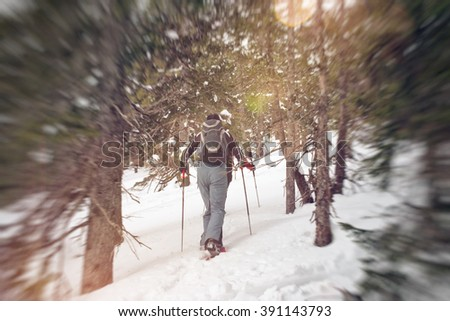 Rear view of cross country snow shoe hikers in snow pants trudging along a hill slope with trees - stock photo