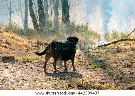 Rear view of dog on path near branch with trees growing around him and copy space above - stock photo