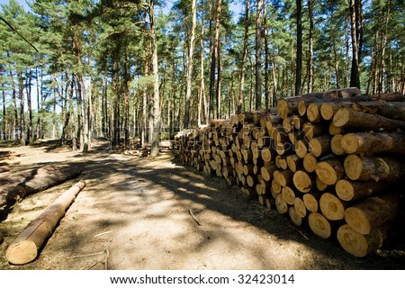 Recently cut down and piled pine logs at the edge of the forest - stock photo