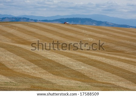 Recently harvested and harrowed wheat field with a truck passing over the top of the hill - stock photo