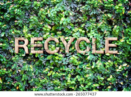 Recycle made of wood word on leaves wall,Eco concept. - stock photo