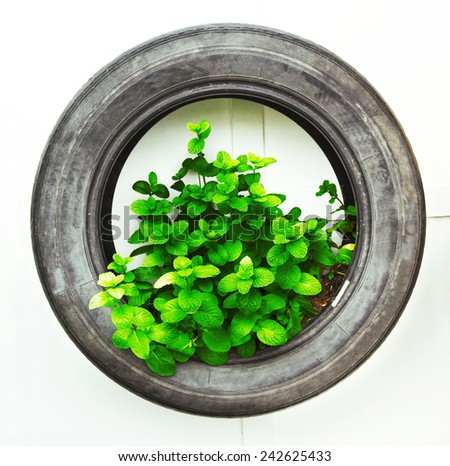 recycle of tire used in organic vegetable     - stock photo