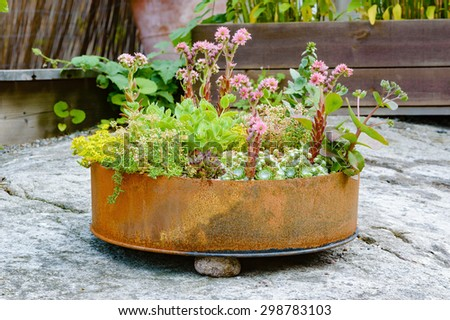 Recycle or up cycle in the garden. Here is a cut of metal barrel with different flowers in it. Barrel bottom is rusty and old but serves fine as plant container. - stock photo