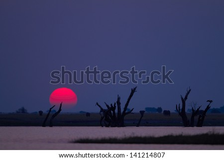 Red African sunset from the Chobe River in Southern Africa - Copyspace - stock photo