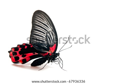 Red and black butterfly isolated on white background - stock photo
