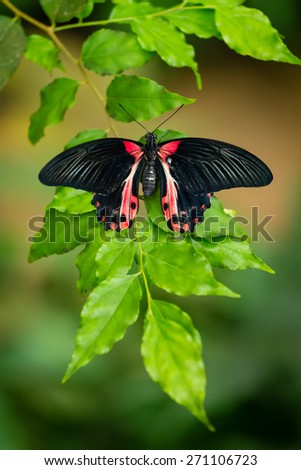 Red and black tropical butterfly resting on the green branch - stock photo