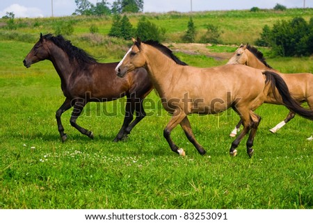 Red and brown horses running to the green meadow - stock photo