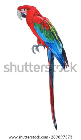 red-and-green macaw from Brazil South America, watercolor illustration - stock photo