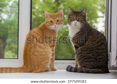 Red and grey cat sitting on the window sill - stock photo