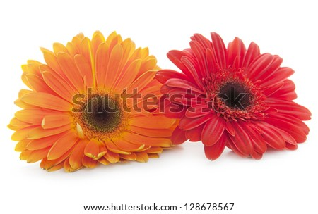 Red and orange daisy flowers on white background - stock photo