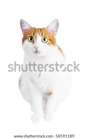 red and white cat isolated - stock photo