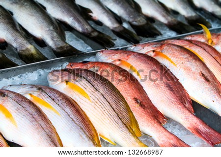 Red and white snapper at a fish market - stock photo