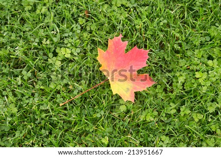 Red and Yellow Autumn Maple Leaf Lying on Grass - stock photo