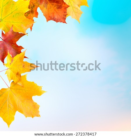 Red and yellow maple leaves against light-blue background with copy space - stock photo