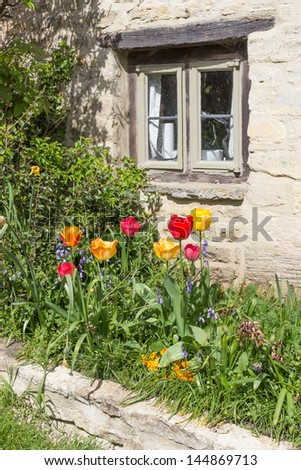 Red and yellow tulips outside a cottage window, in the picturesque village of Bibury in the Cotswolds, UK. - stock photo