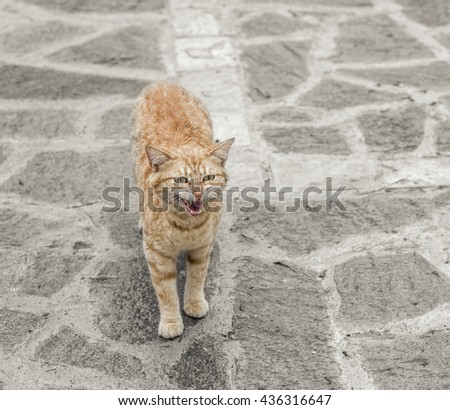 Red angry cat on stone floor outdoors. - stock photo