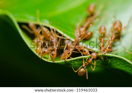 red ant teamwork in the nature - stock photo