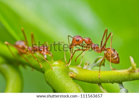 red ants in the nature - stock photo