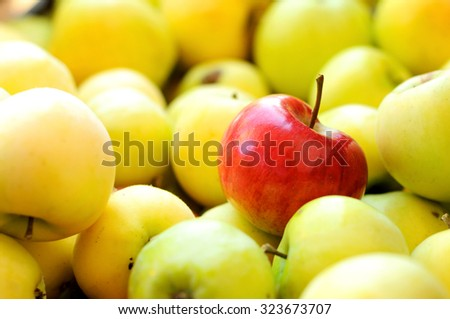 Red apple among group of yellow apples. Unique - stock photo