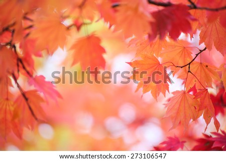 Red Autumn maple leaves close-up and soft focus - stock photo