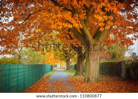 Red autumn oak tree - stock photo