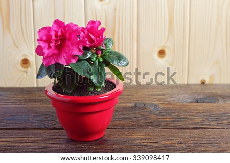 Red Azalea flower in a flower pot on old wooden table - stock photo
