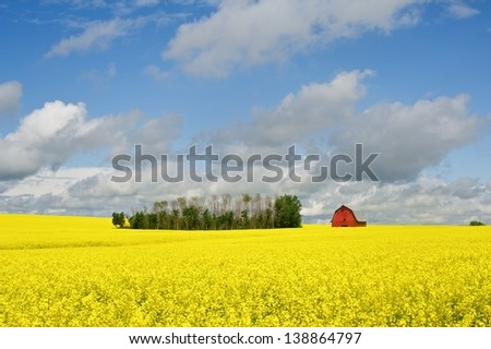 red barn in canola field - stock photo