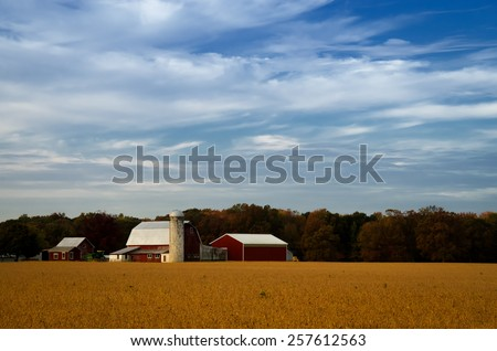Red Barn in Golden Field is a landscape photograph that was created one early morning in late fall after the crops started to dry out in Middletown Delaware. - stock photo